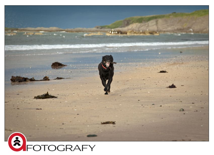 North-berwick-dog-pet-portrait