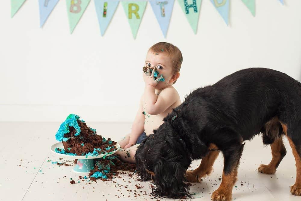 cake smash photoshoot with dog