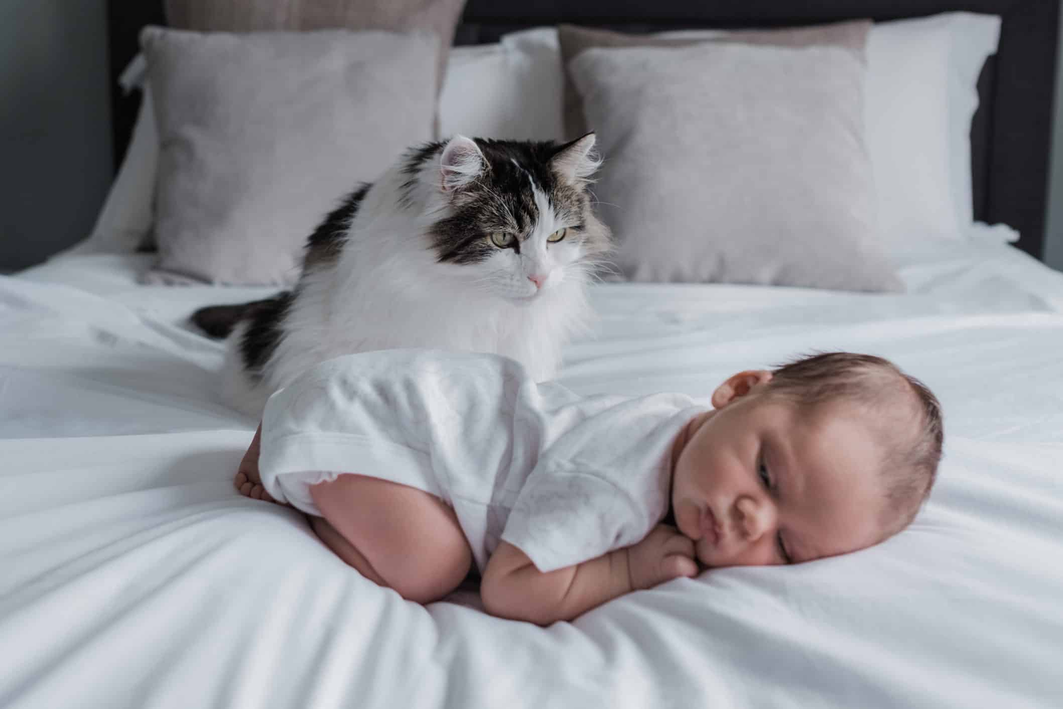 cat and newborn baby during photoshoot in Edinburgh