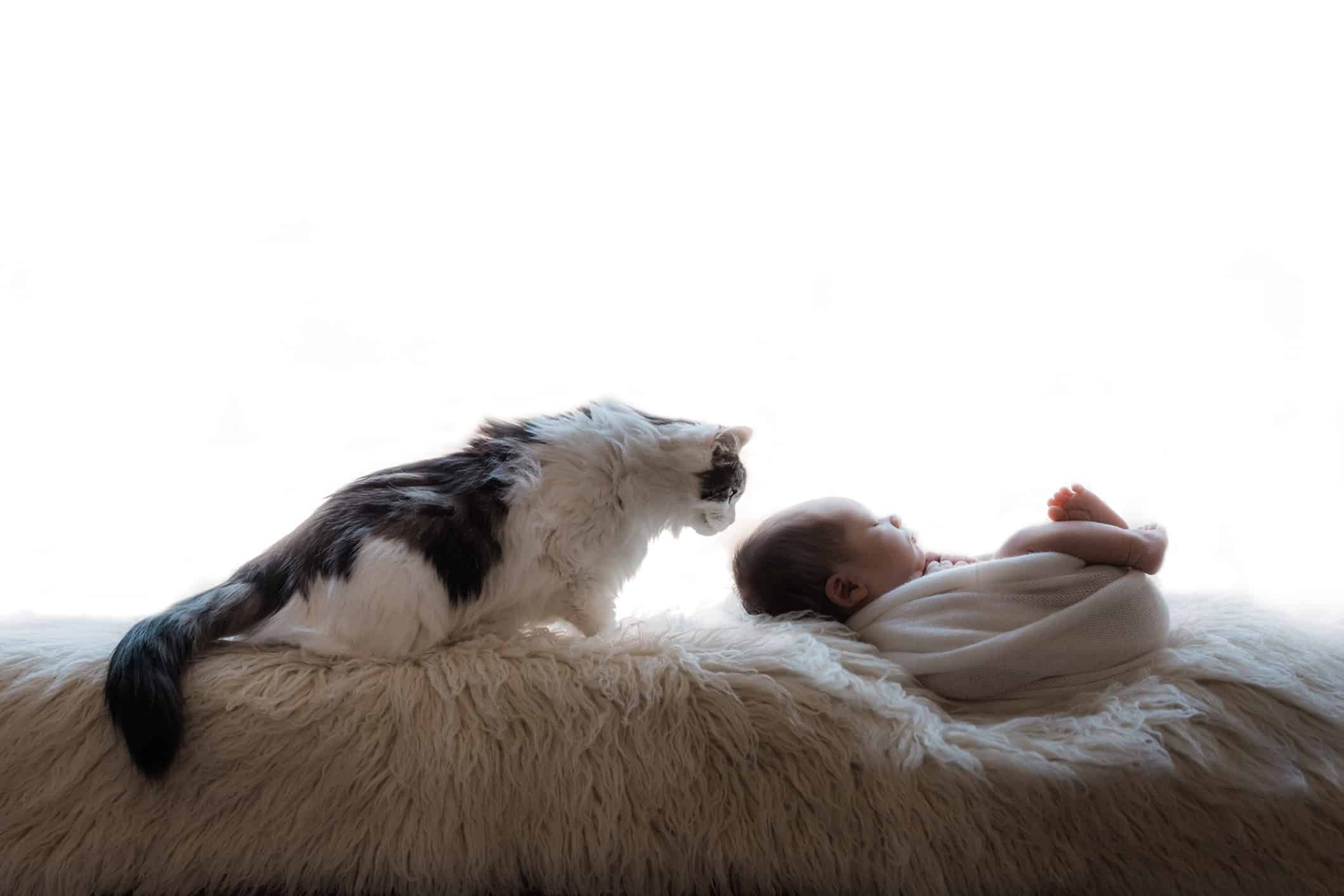newborn photo with cat looking down on baby.