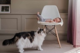 newborn photography ideas with cats. Edinburgh newborn photoshoot