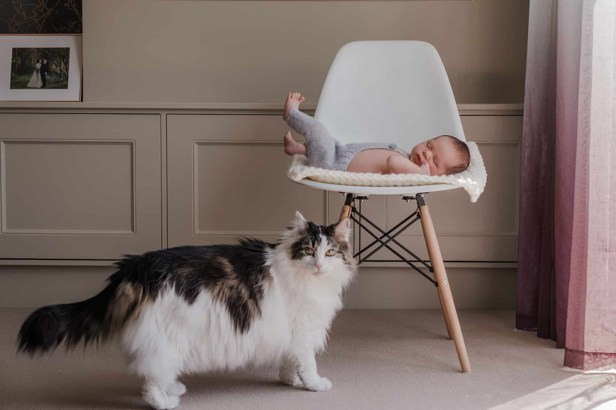 newborn photography ideas with cats. Edinburgh newborn photoshoot