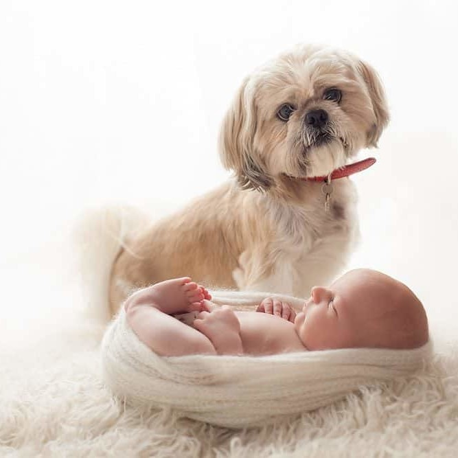 Newborn photo with pet dog done at Edinburgh photo studio