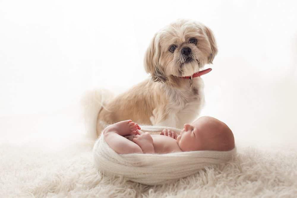 Newborn photo with pet dog done at Edinburgh photo studio