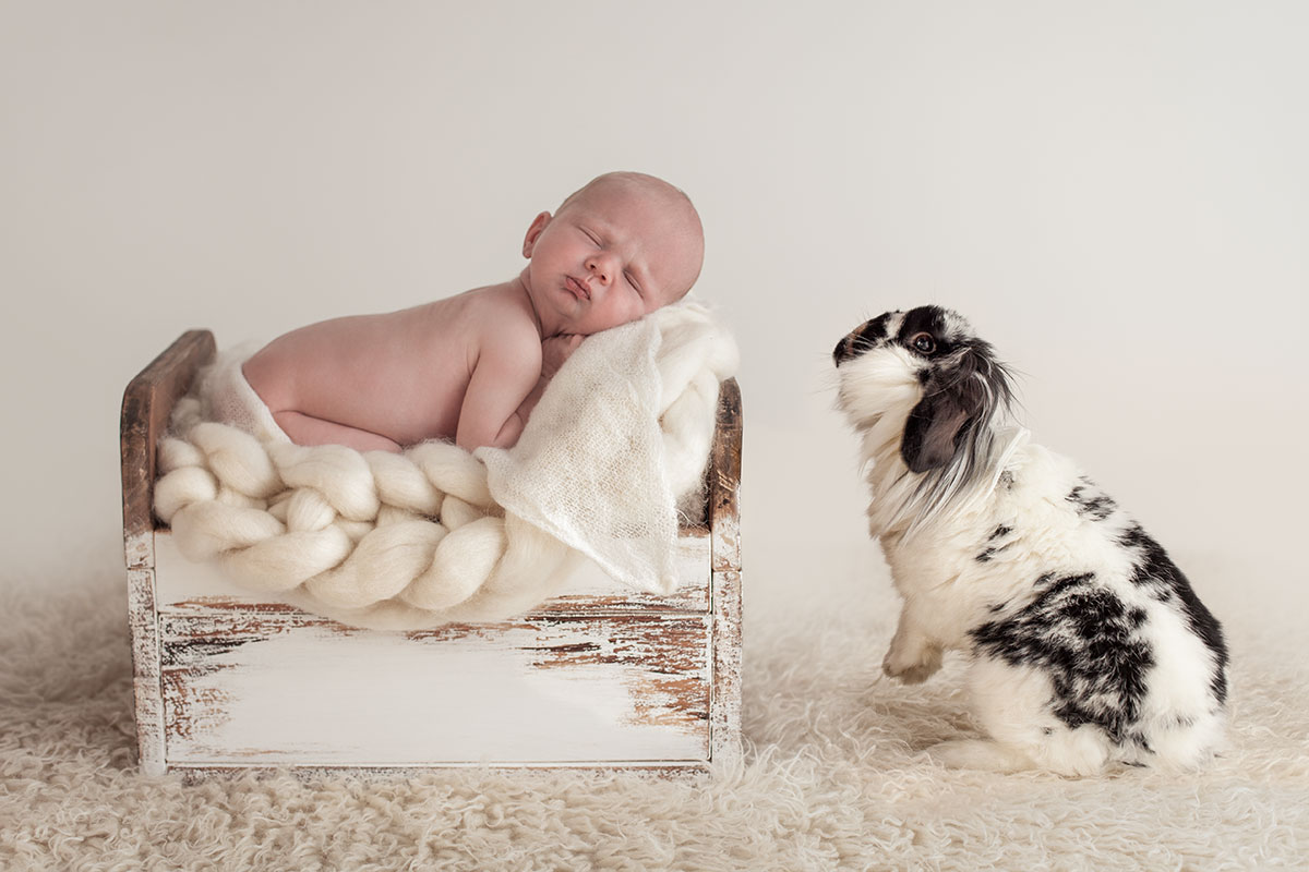 Newborn Baby and Dog Photography Guide 12