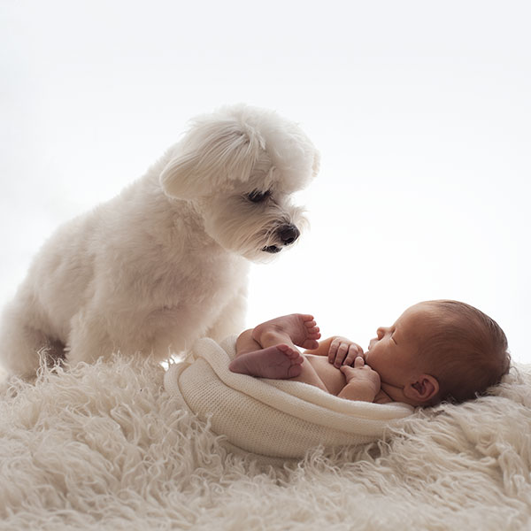 Newborn Baby and Dog Photography Guide 1