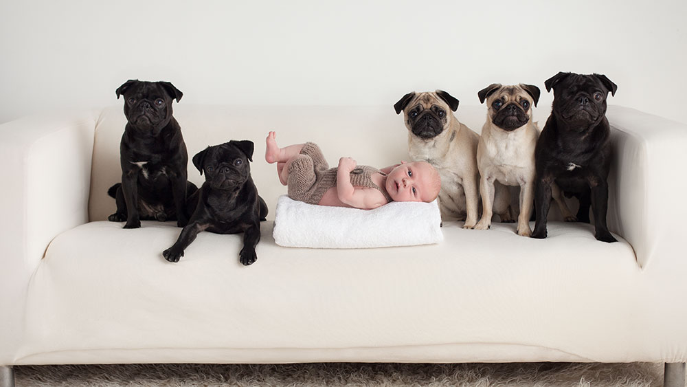 newborn baby and dog photos photoshoot