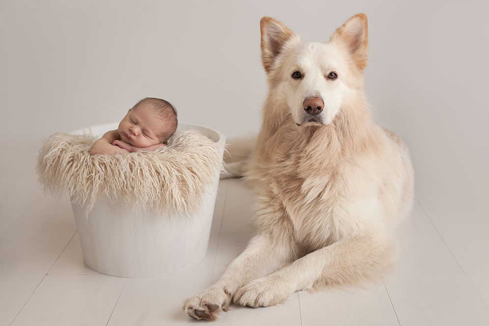 Newborn Baby and Dog Photography Guide 2