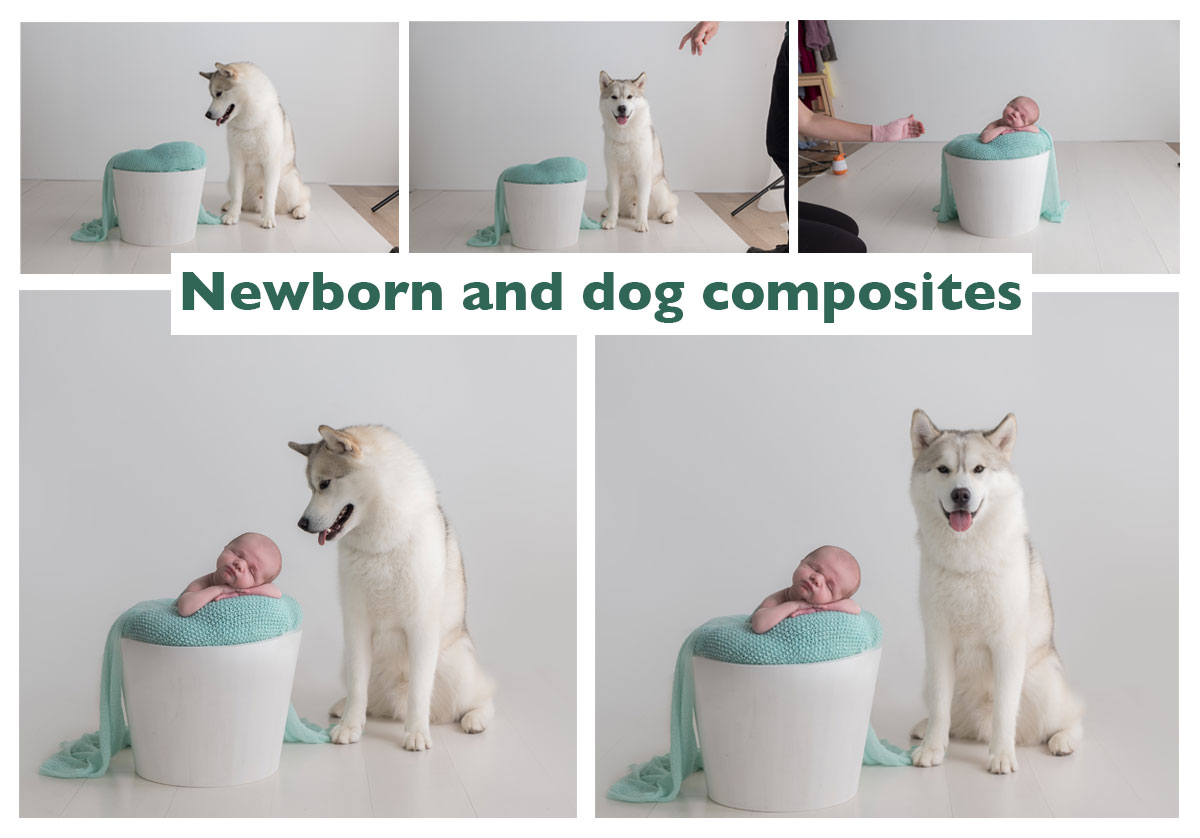 newborn baby and dog photography composite