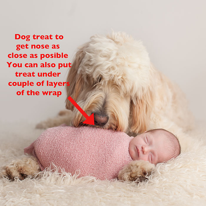Newborn Baby and Dog Photography Guide 6