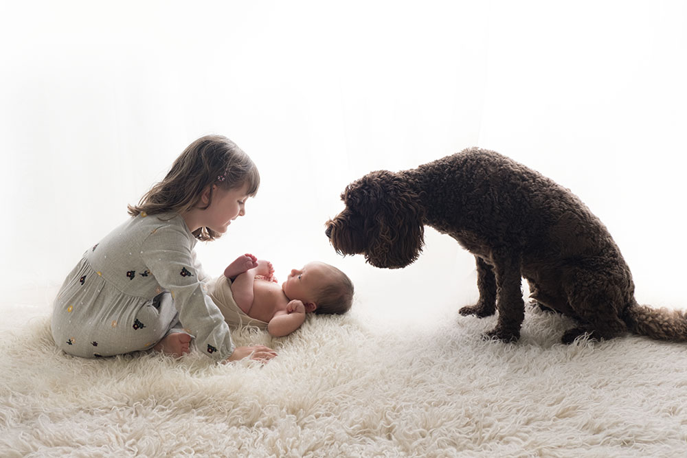 newborn baby photos with dog and siblings