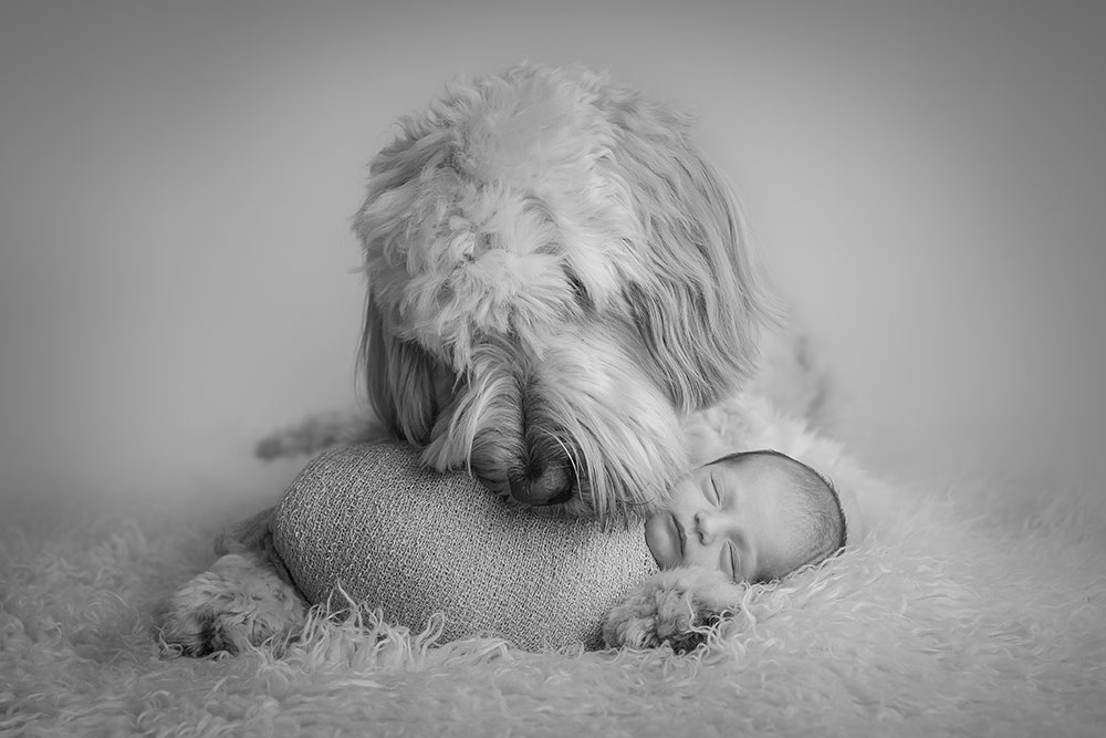 baby and dog photos during professional photoshoot