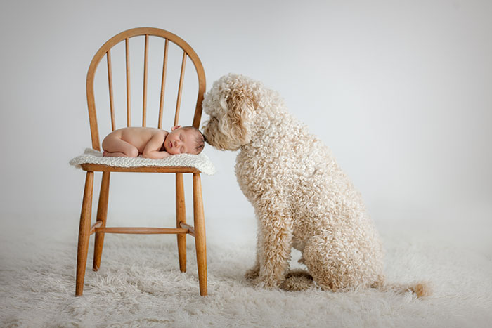 Newborn Baby and Dog Photography Guide 4
