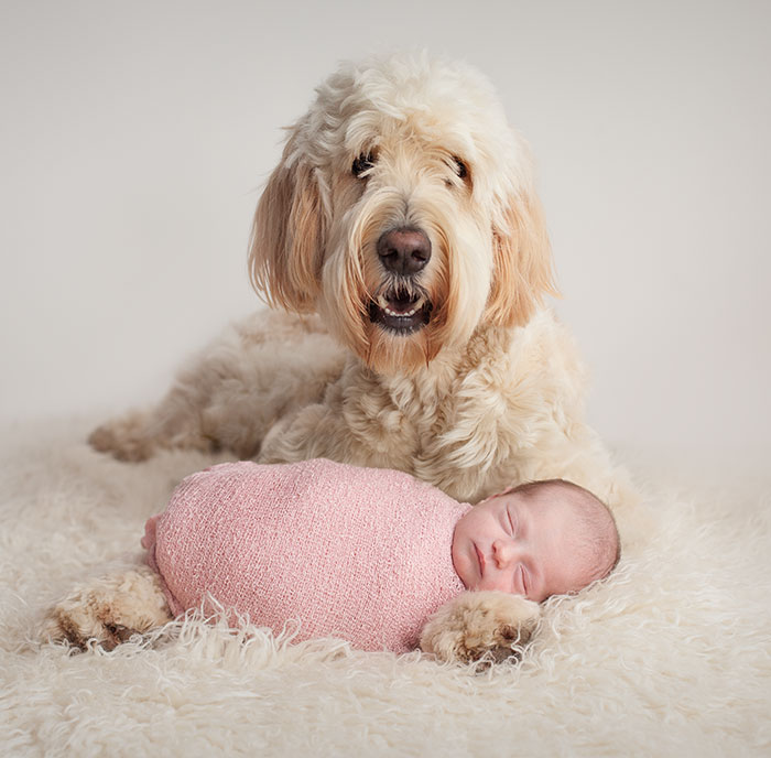 baby photos with dog